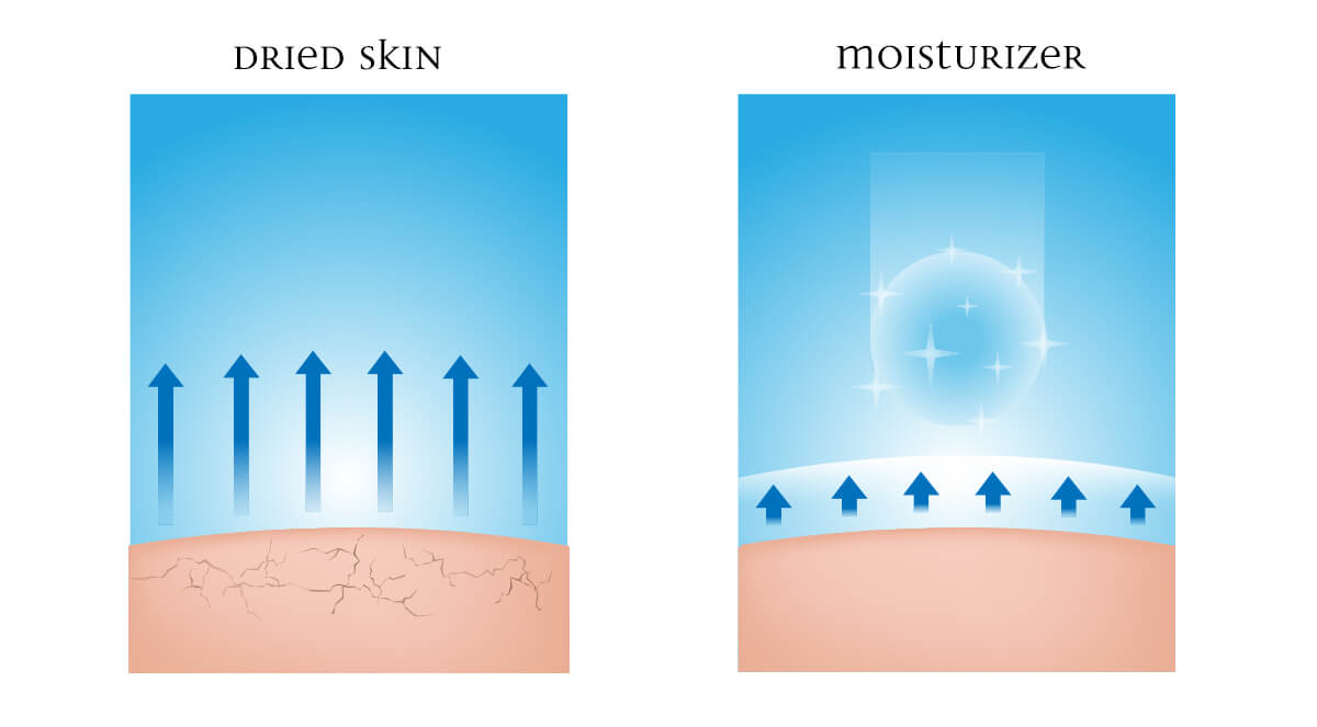 Infographic showing dried skin and moisturized skin