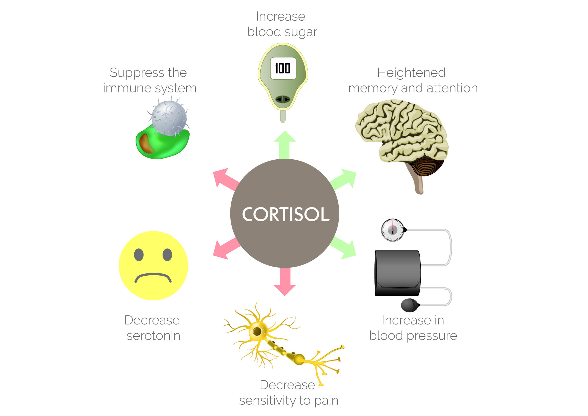 Infographic on cortisol